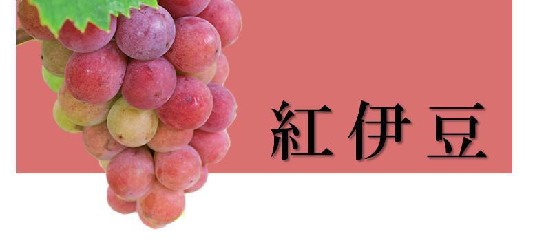 紅伊豆 ぶどう 丹後のブドウ