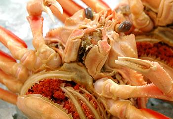日本海でとれたせこ蟹SSサイズ5匹セット【送料込】