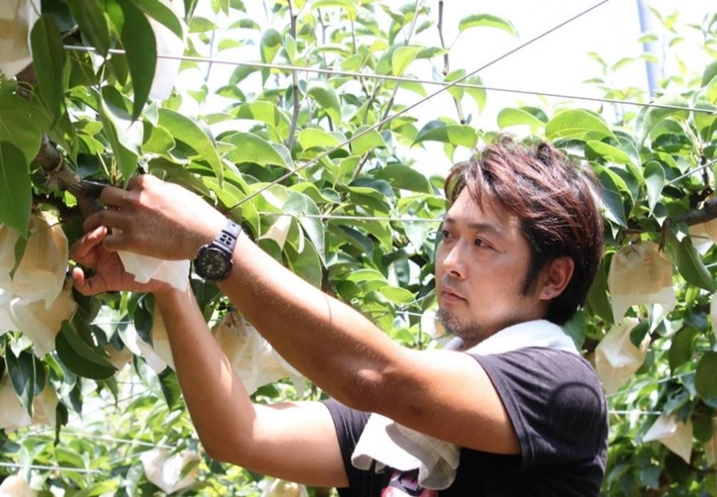 果樹農家の白岩さん